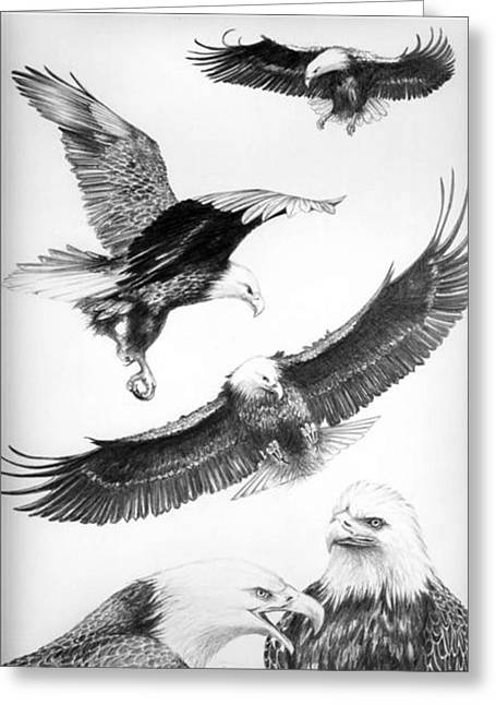 Eagles Gathering Greeting Card by Bob Patterson