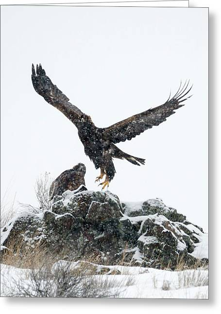 Eagles In The Storm Greeting Card by Mike Dawson