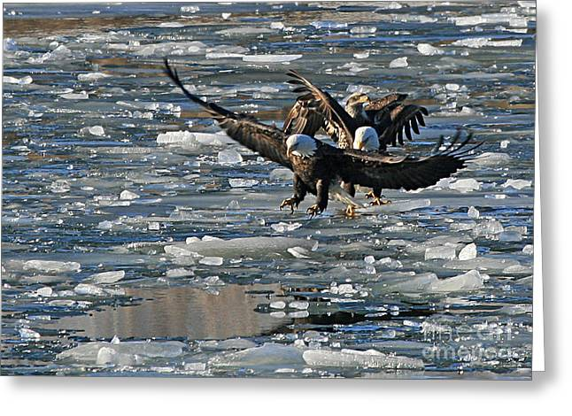 Eagles On Ice Greeting Card