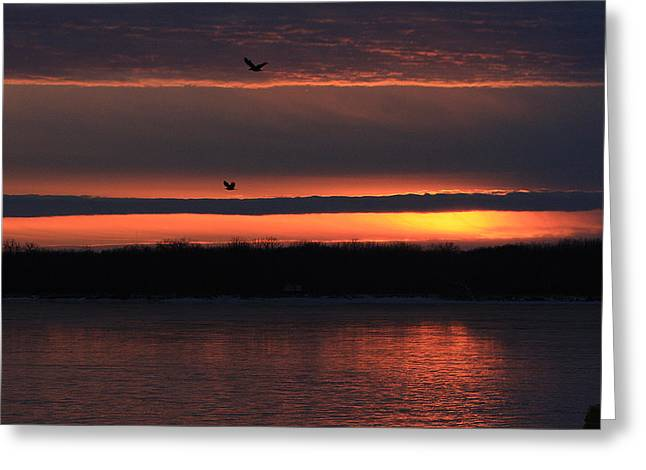 Eagles Over The Mississippi Greeting Card by Dave Clark