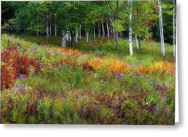 Early Autumn Colors Greeting Card