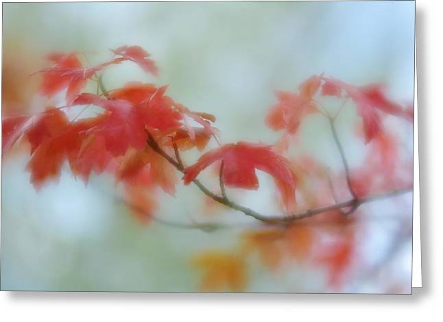 Greeting Card featuring the photograph Early Autumn by Diane Alexander