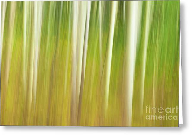 Greeting Card featuring the photograph Early Autumn Impression by Brenda Tharp