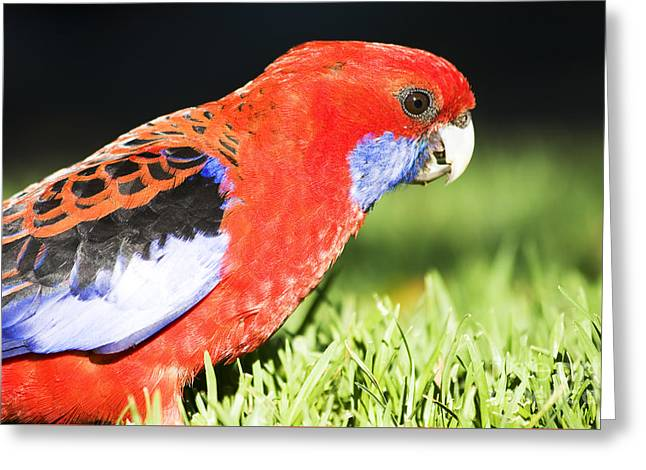 Early Bird Greeting Card by Jorgo Photography - Wall Art Gallery