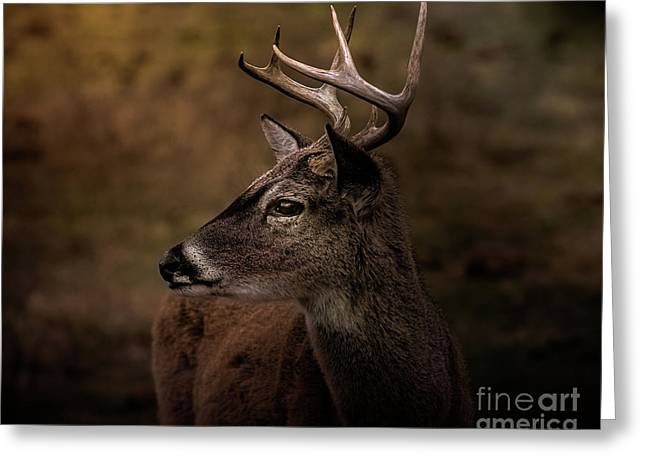 Early Buck Greeting Card by Robert Frederick