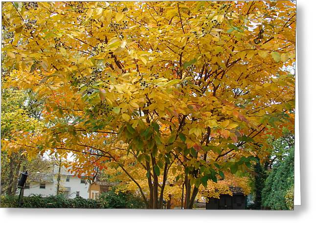 Early Fall Greeting Card by Gregory Smith