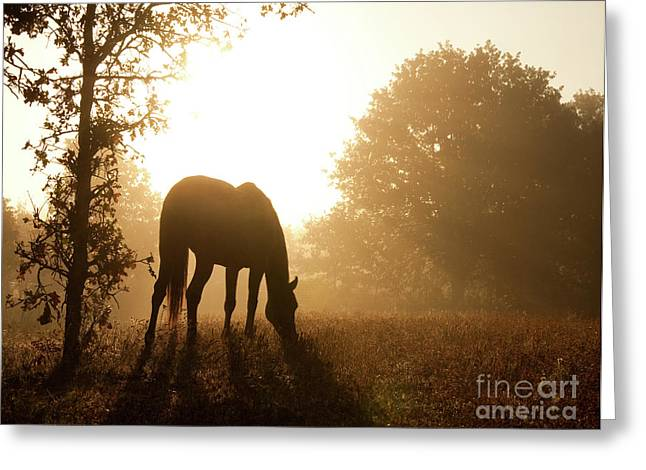 Early Fall Morning Greeting Card