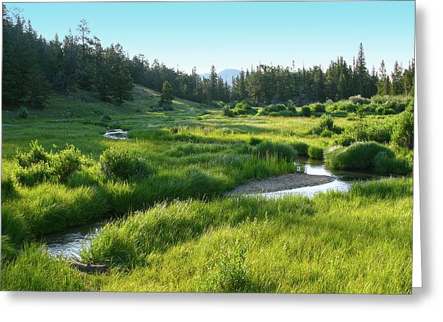 Greeting Card featuring the photograph Early Morning Along The Stream by Marie Leslie