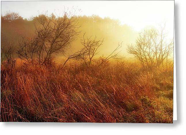 Early Morning Country Greeting Card