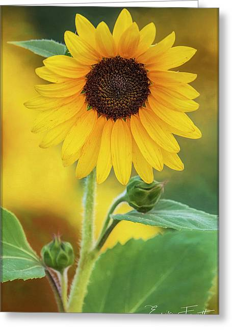 Early Morning Greeting Card