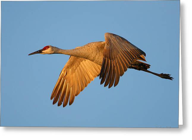 Greeting Card featuring the photograph Early Morning Flight by Gerry Sibell