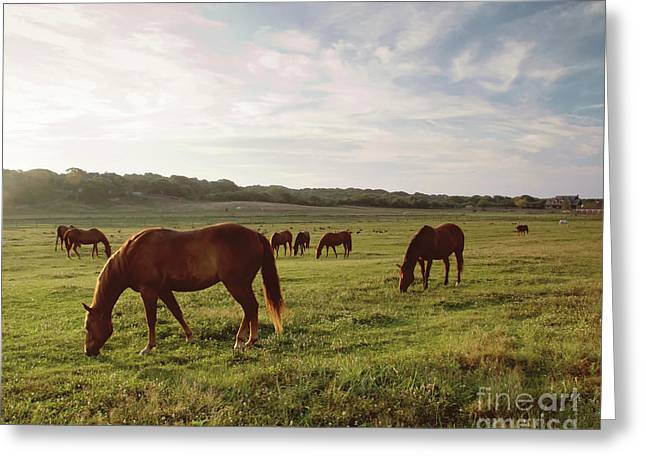 Early Morning Graze Greeting Card