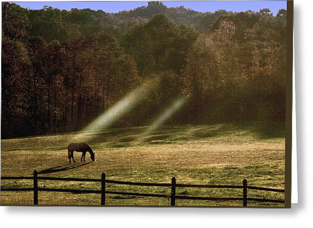 Greeting Card featuring the photograph Early Morning Grazing by Diane Merkle