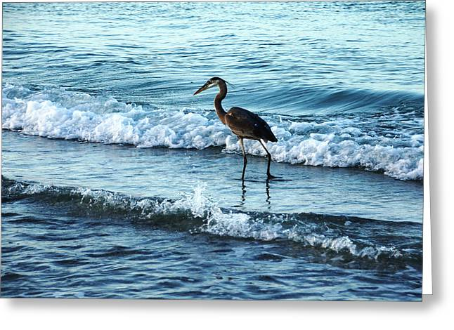Early Morning Heron Beach Walk Greeting Card