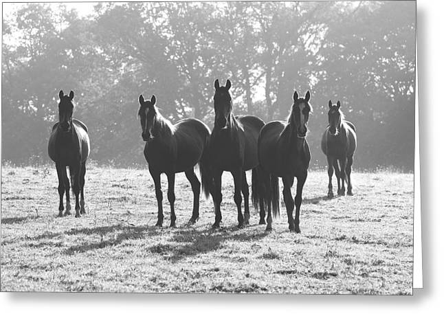 Early Morning Horses Greeting Card