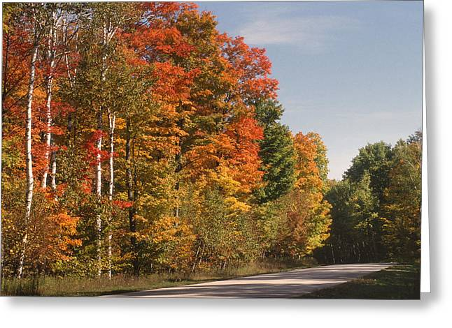 Birch Tree Greeting Cards - Early Morning in Door County Greeting Card by Sandra Bronstein