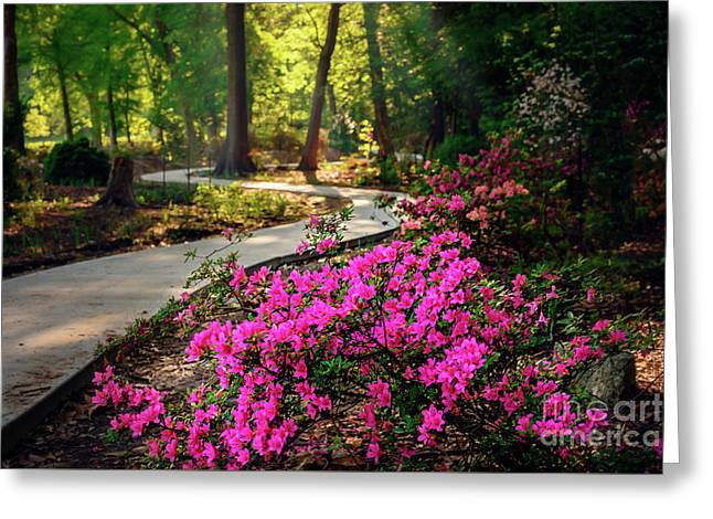 Early Morning In Honor Heights Park Greeting Card by Tamyra Ayles