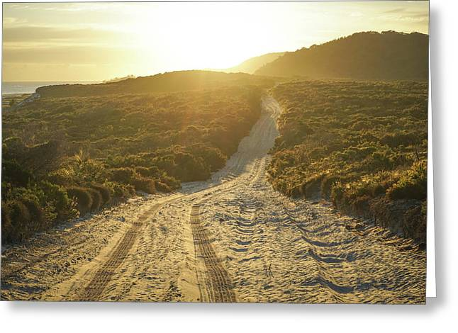 Early Morning Light On 4wd Sand Track Greeting Card