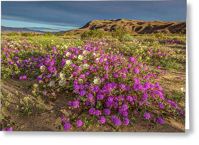 Greeting Card featuring the photograph Early Morning Light Super Bloom by Peter Tellone