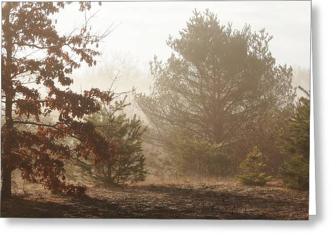 Greeting Card featuring the photograph Early Morning Nature by Scott Hovind