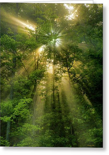 Early Morning Peace Greeting Card by Christina Rollo