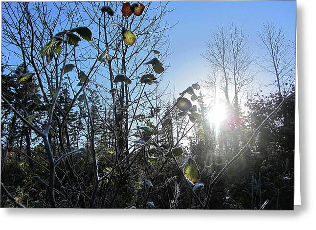 Early Morning Sun Greeting Card by Andy Walsh