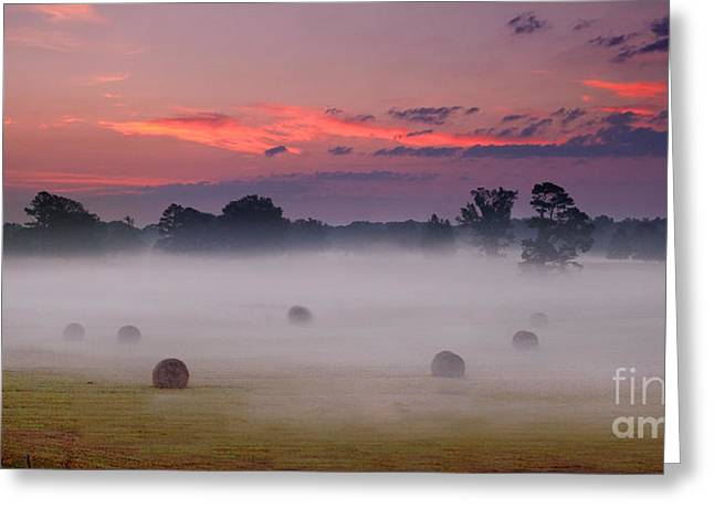 Early Morning Sunrise On The Natchez Trace Parkway In Mississippi Greeting Card by T Lowry Wilson