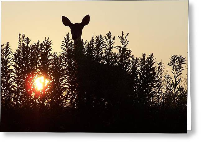 Early Morning Visitor Greeting Card by Laurie Prentice