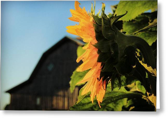 Greeting Card featuring the photograph Early One Morning by Chris Berry