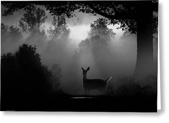 Ron Jones Greeting Cards - Early Riser Greeting Card by Ron Jones