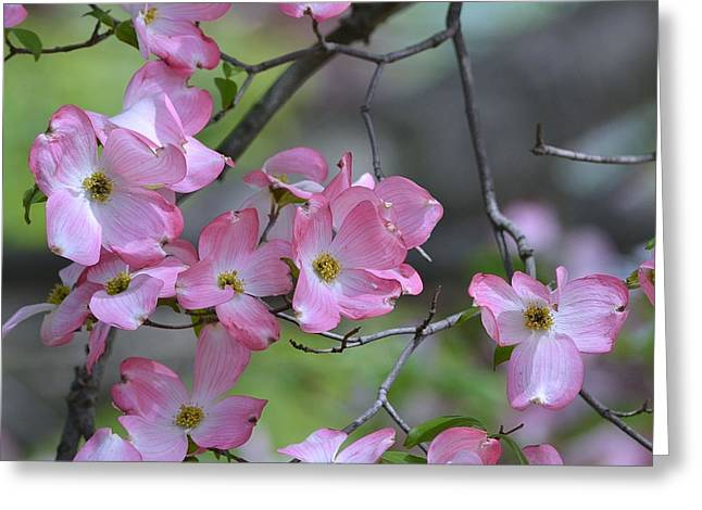 Early Spring Color Greeting Card by Kathy Eickenberg