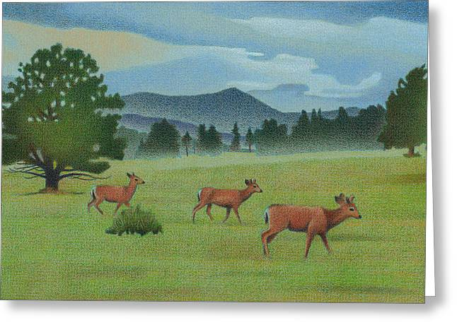 Early Spring Evergreen Greeting Card