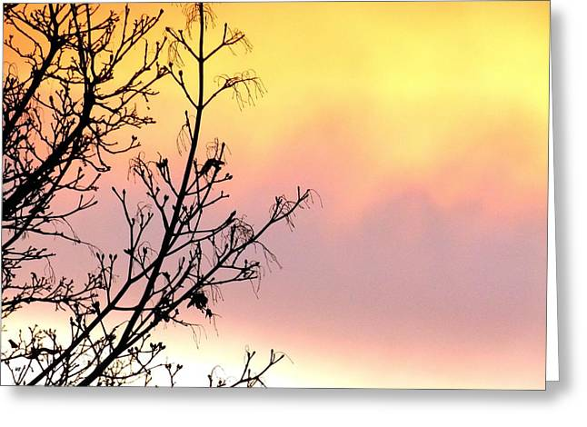 Greeting Card featuring the photograph Early Spring Sunset by Will Borden