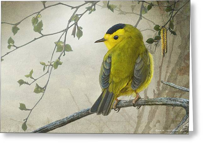 Early Spring Wilson's Warbler Greeting Card by R christopher Vest