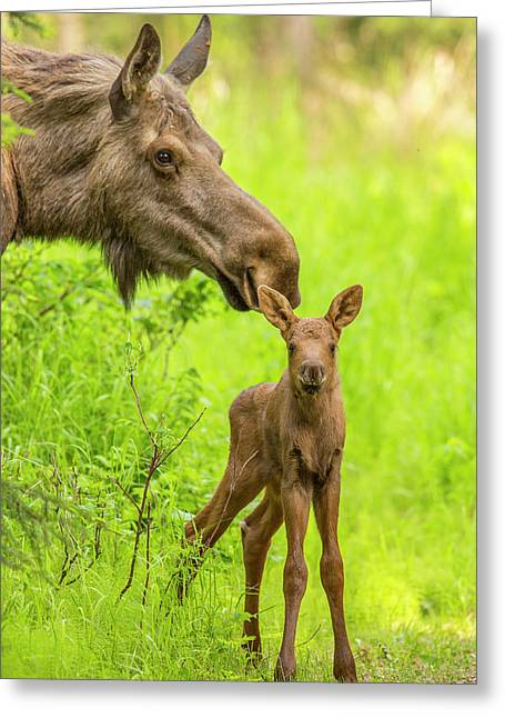 Ears Up Greeting Card by Tim Grams