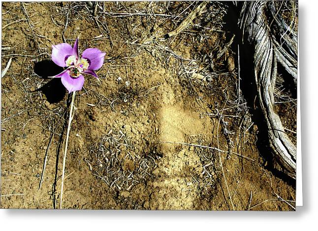 Greeting Card featuring the photograph Earth Memories - Desert Flower # 2 by Ed Hall