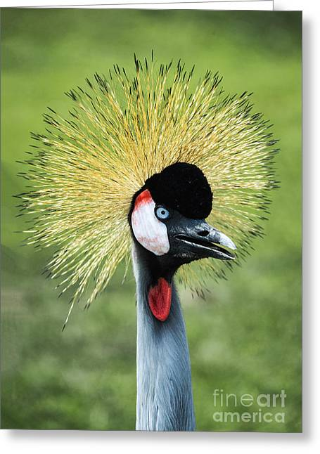 East African Crowned Crane Greeting Card
