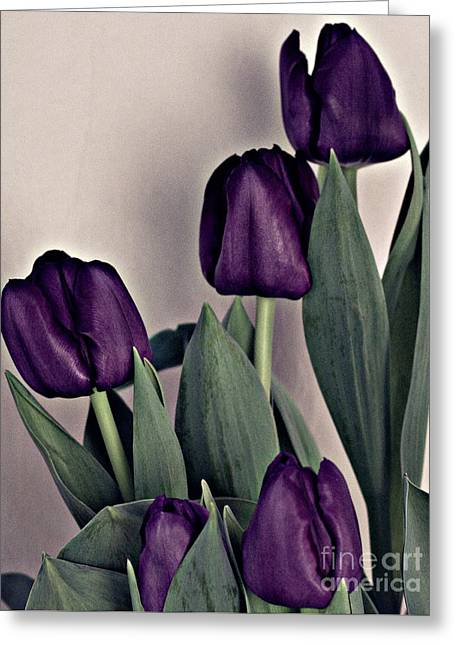 A Display Of Tulips Greeting Card by Sherry Hallemeier