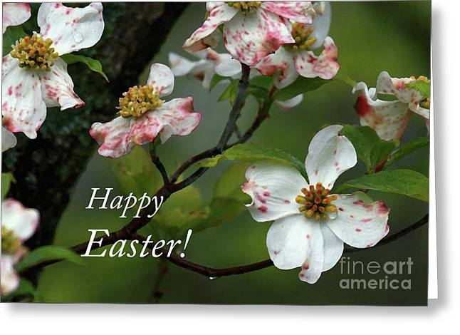 Easter Dogwood Greeting Card by Douglas Stucky