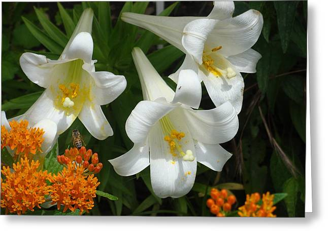 Easter Lilies And Butterfly Weed Greeting Card