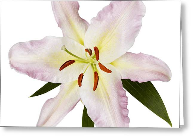 Easter Lilly 1 Greeting Card by Tony Cordoza