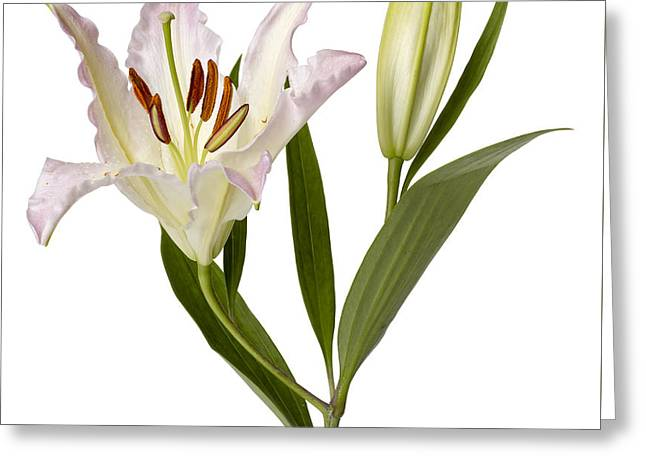Easter Lilly Greeting Card by Tony Cordoza