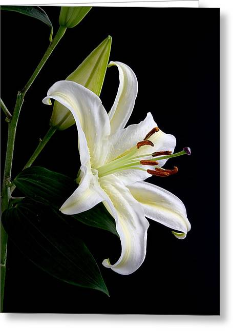 Easter Lily 5 Greeting Card