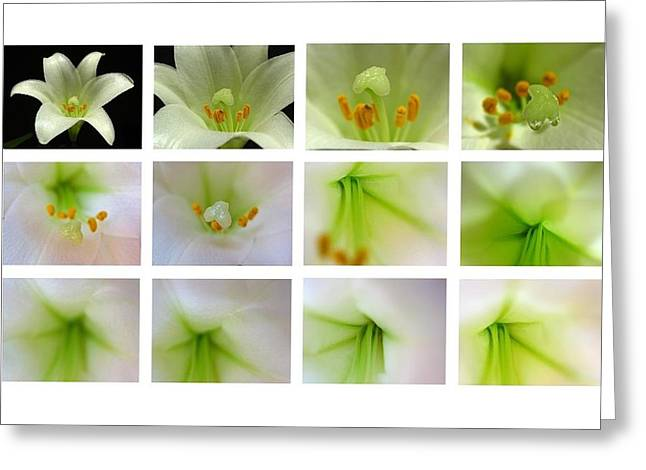 Easter Lily Greetings Greeting Card by Juergen Roth