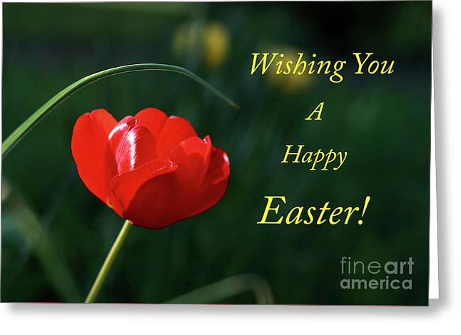Greeting Card featuring the photograph Easter Tulip by Douglas Stucky