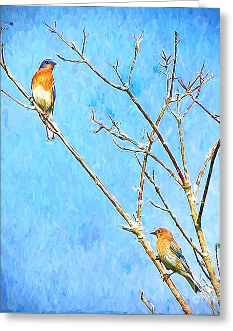 Eastern Bluebird Couple Greeting Card