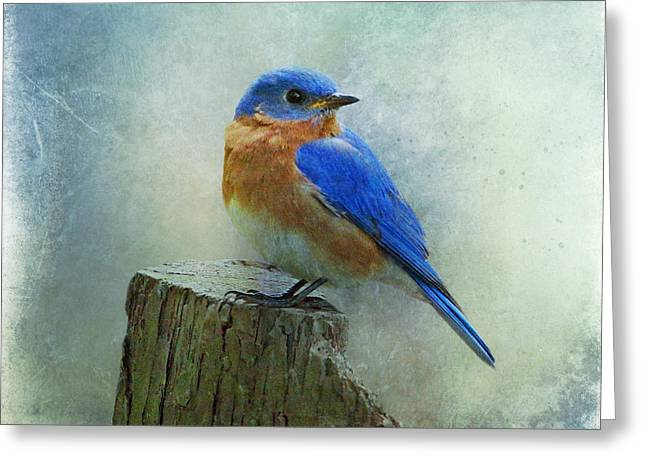 Eastern Bluebird II Greeting Card by Sandy Keeton