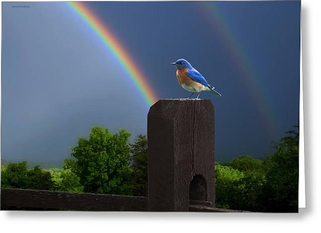 Eastern Bluebird Greeting Card by Ron Jones