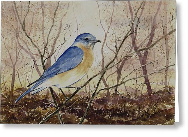 Eastern Bluebird Greeting Card by Sam Sidders