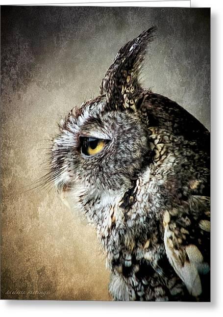 Eastern Gray Morph Screech Owl Profile Greeting Card by Melissa Bittinger